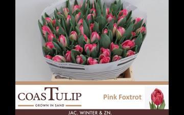 Pink foxtrot