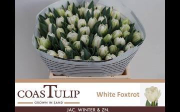 foxtrot White